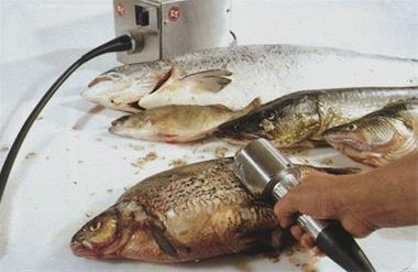 دستگاه پولک گیر و فلس گیر ماهی